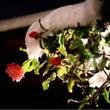 「雪椿」と、京都生ま…