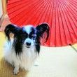 (*^▽^*)和傘を…