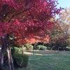 秋の色の画像
