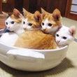 鍋の〆は、、、雑炊派