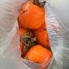 つる柿の画像