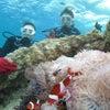 青の洞窟には行くことができませんでしたが、お魚いっぱいのクマノミポイントへ!!の画像