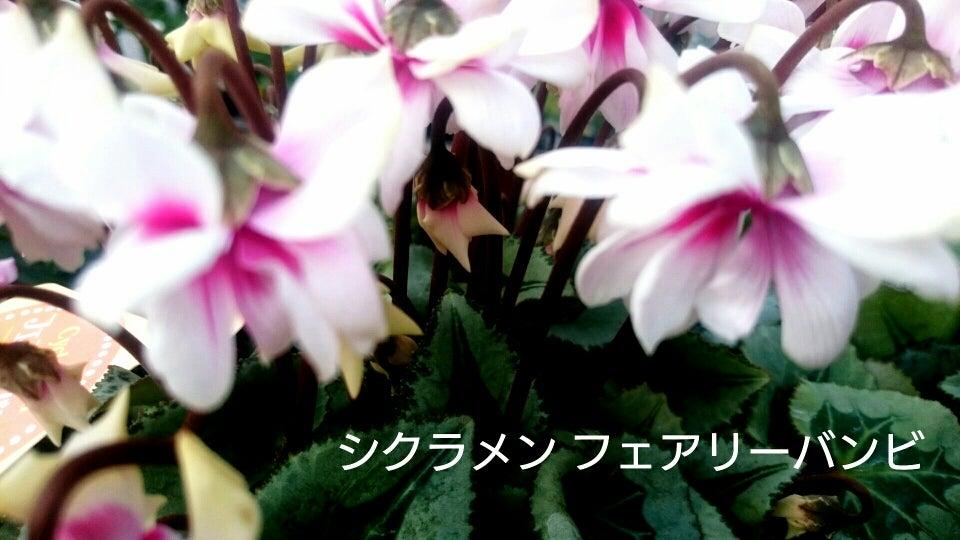 IMG_20161205_210556022.jpg