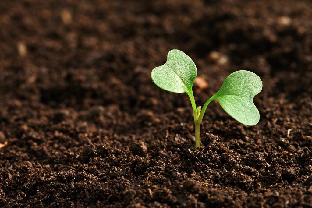 チャンスの芽」の見つけ方 | ほ...