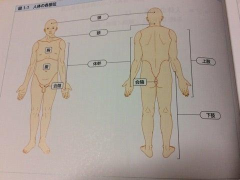 人の体の名前。   と〜ちゃんセラピスト やすのブログ