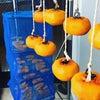 毎年恒例の干し柿の画像