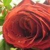 お花が枯れることは悲しくないの画像