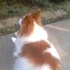 ☆愛犬のマロンの画像
