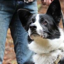 お山のドッグラン・『犬日和』さんへ!の記事に添付されている画像