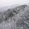 【韓国旅行/水原】水原の名所-水原で楽しむ冬【雪の花】が美しい名所 Best3!の画像