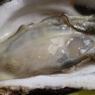 【牡蠣が美味しい季節到来です。】の記事より
