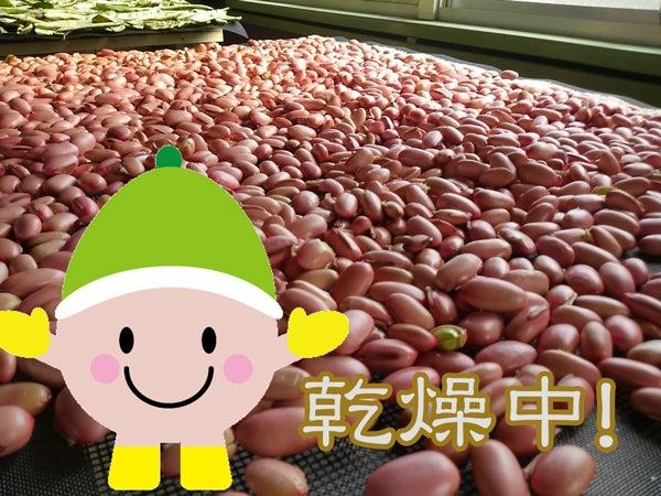 門出豆 なたまめのマメッチー 今はなた豆、乾燥真っ盛り!うめぇ