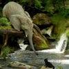 動物たちの助け合いの画像