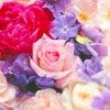 横浜の  花材屋さん  バードゲージ   &  ボックスウッドベリーが  人気?!の画像