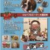 犬のM基金さんのイベント参加!の画像