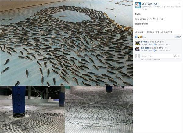 魚の氷漬けアイスリンク3