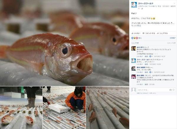 魚の氷漬けアイスリンク1