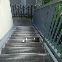 猫の溜まり場
