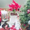ポインセチアを飾りクリスマス支度☆♪の画像