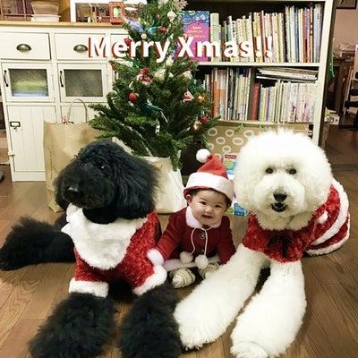 脱 昭和なクリスマスツリー・・のはず(^^;)の記事に添付されている画像