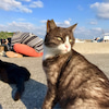 猫!ねこ!ネコの奥武島と、ヤハラヅカサでオルゴナイトさんの海水浴の画像