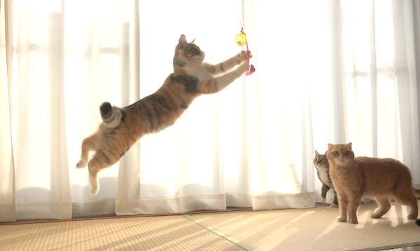 おもちゃに夢中でジャンプする猫たち