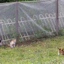 捕獲器のお届けと、猫…