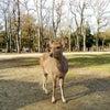シカの楽園 奈良公園ぷちツーリングの画像