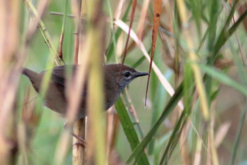 インドの野鳥|鳥好きFPのつれづ...
