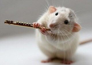 占い ネズミ 夢