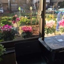 窓辺の花たちも華やか…