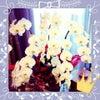 ♡blogでご紹介ありがとうございます♡の画像