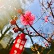 梅春と七草粥