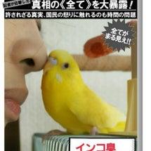 鳥雑貨屋「黄色いイン…