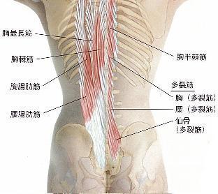 体幹〜多裂筋と股関節外旋〜 | ...