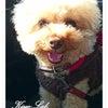 愛犬柿ちゃんとの休日◆KiyoのDiaryの画像