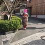 京都 観光案内 その…