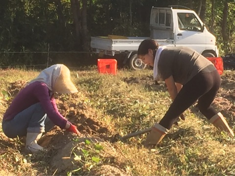 大和アグリラボ 奈良県農業体験 農業見学 奈良県農の担い手育成 家庭菜園の記事より
