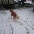 初雪なのに、、、、