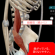 【解剖実習INアリゾ…