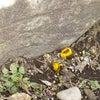 春を見つけるの画像