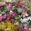 神様に献花‼️の画像