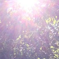 ミューの天らか降りてきた短い言葉と光の写真No7 皆様の気づきやヒントになれば幸の記事に添付されている画像