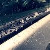 「先生!雪よ!」の画像