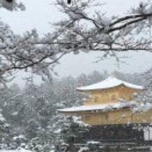 雪の金閣寺 本日も気…