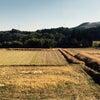 宮崎の電車の旅の画像