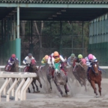 2017競馬初め