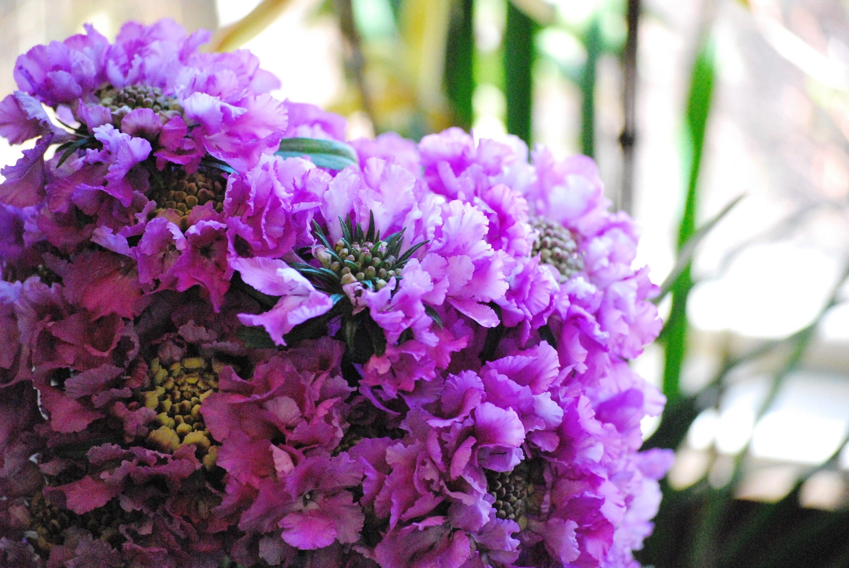 圧迫。 | 川越の花屋Nestの日常