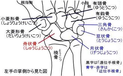 「有鈎骨」の画像検索結果
