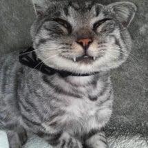 動物の顔を見て、笑い…